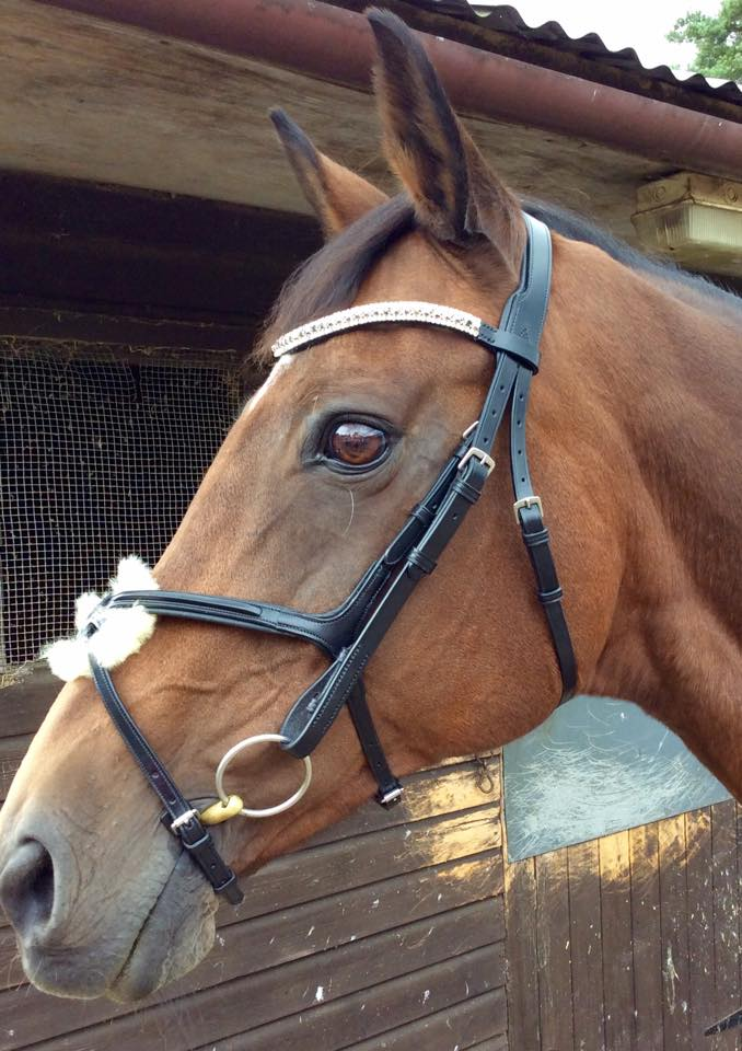 Grand Prix Rio showjumping bridle