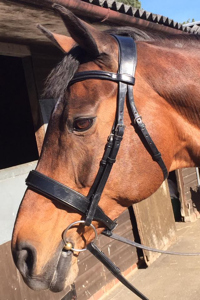 The Lincoln Hunter Bridle